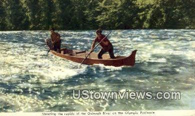 Quinault River - Olympic Peninsula, Washington WA Postcard