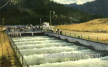 Fish Ladder - Misc, Washington WA Postcard