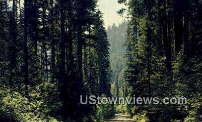 Pacific Northwest, Washington,     ;     Pacific Northwest, Wash Postcard