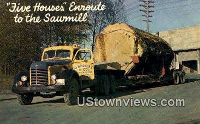 Logging, Trasported - Pacific Northwest, Washington WA Postcard