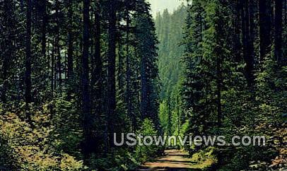 Pacific Northwest, Wash,     ;     Pacific Northwest, WA - Washington WA Postcard