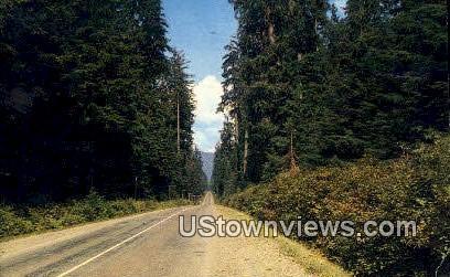 Western Washington Highway, WA     ;     Western Washington Highway, Washington - Western Washington Highway Postcards Postcard