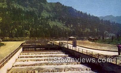 Bradford Island Fish Ladder - Bonneville Dam, Washington WA Postcard