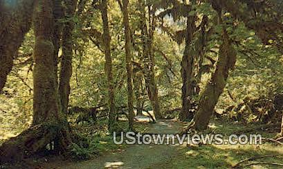 Hall of Mosses, Rain Forest - Olympic National Park, Washington WA Postcard