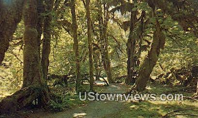 Hall of Mosses, Rain Forest - Olympic National Park, Washington WA Postcard