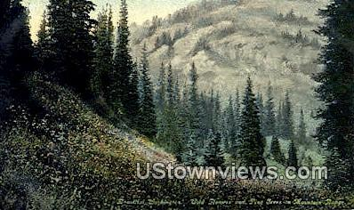 Wild Flowers & Pine Trees - Mountain Range, Washington WA Postcard
