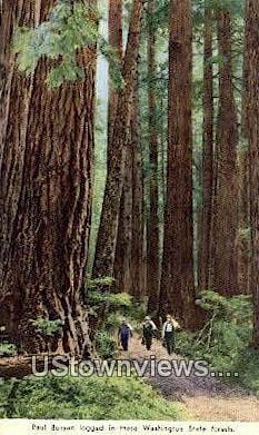 Paul Bunyan - Washington State Forest Postcards, Washington WA Postcard