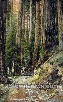 Washington Forest, Wash,     ;     Washington Forest, WA - Washington Forest Postcards Postcard