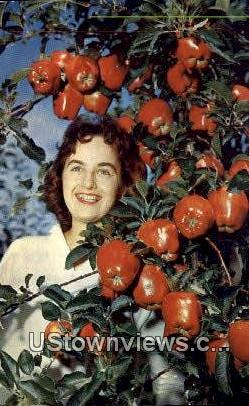 Apple Harvest Time - Misc, Washington WA Postcard