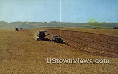 Wheat Harvest - Eastern Washington Postcards, Washington WA Postcard