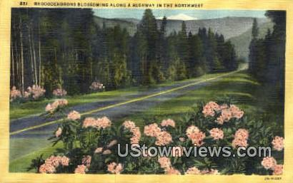 Rhododendrons - Misc, Washington WA Postcard