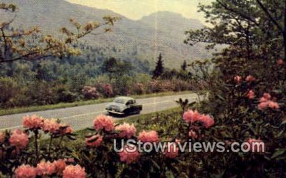 Rhododendrons - Washington Highway Postcards, Washington WA Postcard