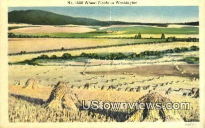 Wheat Fields - Misc, Washington WA Postcard