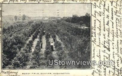 Berry Field - Sumner, Washington WA Postcard