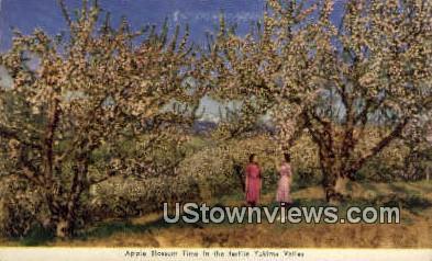 Apple Blossom - Yakima Valley, Washington WA Postcard