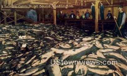 Salmon Catch - Puget Sound, Washington WA Postcard
