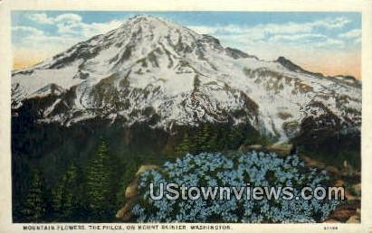 Mountain Flowers, The Phlox - Mt Rainier, Washington WA Postcard