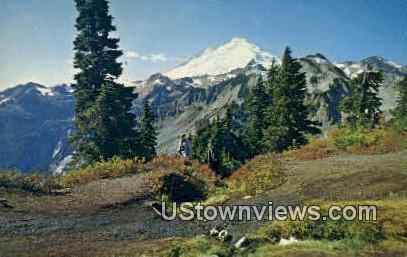 Mt Rainier, WA     ;     Mt Rainier, Washington Postcard