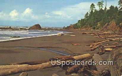 Beach at Trail #4 - Olympic National Park, Washington WA Postcard