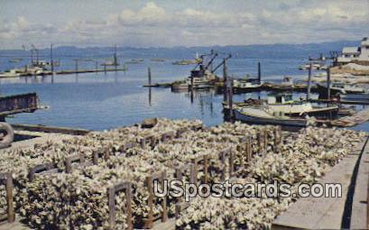Mooring Basin - Nahcotta, Washington WA Postcard