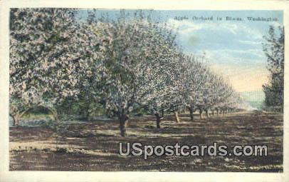 Apple Orchard - Misc, Washington WA Postcard