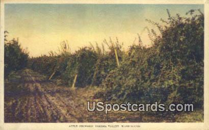 Apple Orchard - Yakima Valley, Washington WA Postcard