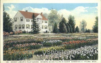 George Lawler's Tulip Garden - Tacoma, Washington WA Postcard
