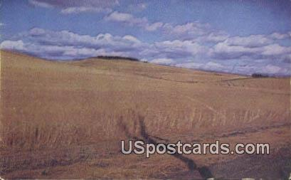 Eastern Washington, Washington Postcard     ;      Eastern Washington, WA - Eastern Washington Postcards
