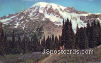 Mt Rainier - Paradise Valley, Washington WA Postcard