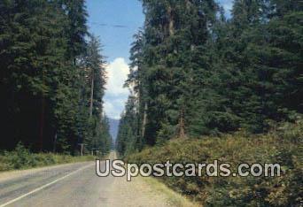 Western Washington Highway, Washington Postcard     ;      Western Washington Highway, WA - Western Washington Highway Postcards