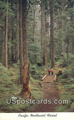 Pacific Northwest Forest, Washington Postcard     ;      Pacific Northwest Forest, WA
