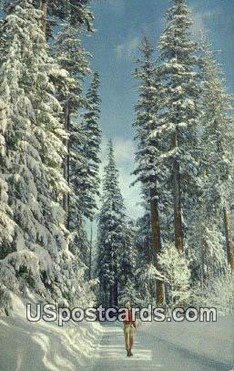 Winter Wonderland - Misc, Washington WA Postcard