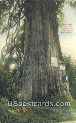 Cedar Tree - Seattle, Washington WA Postcard
