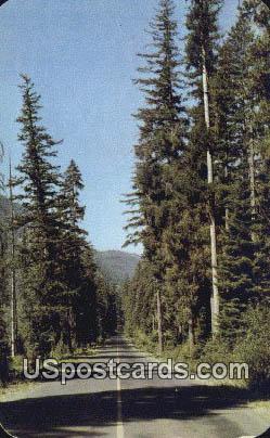 Naches Pass Highway, Washington Postcard     ;      Naches Pass Highway, WA