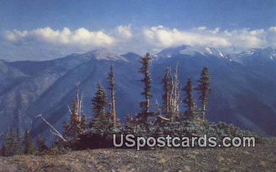 Olympic Mountains - Timber Line, Washington WA Postcard