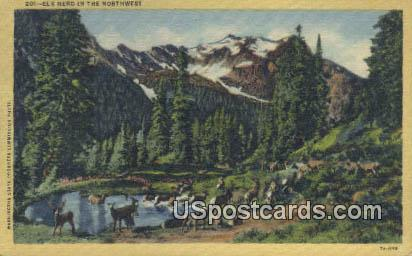 Elk Herd - Misc, Washington WA Postcard