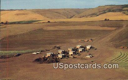 Pea Harvest - Walla Walla, Washington WA Postcard