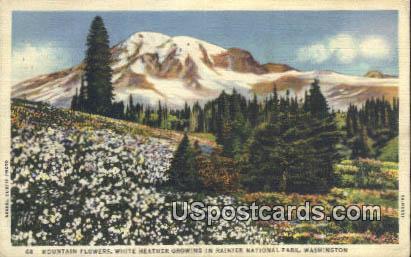 Mountain Flowers - Rainier National Park, Washington WA Postcard