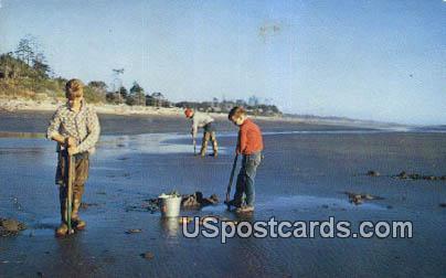 Razor Clam Digging - Pacific Ocean, Washington WA Postcard