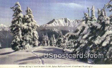 Mount Baker National Forest, Washington Postcard     ;      Mount Baker National Forest, WA Post Car