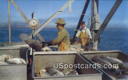 Unloading Salmon - Misc, Washington WA Postcard