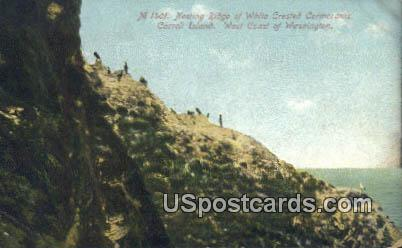 Nesting Ridge - Carroll Island, Washington WA Postcard