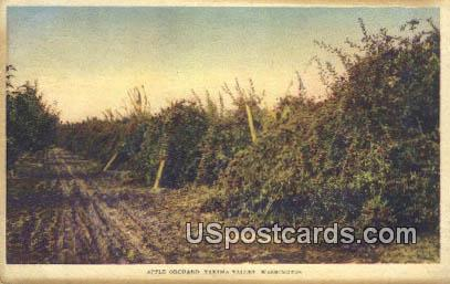 Apple Orchard - Yakima, Washington WA Postcard