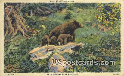 Native Brown Bear & Cubs - Rainier National Park, Washington WA Postcard