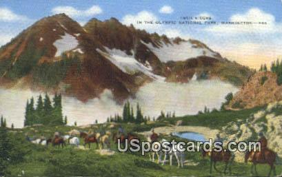 Trail Riders - Olympic National Park, Washington WA Postcard