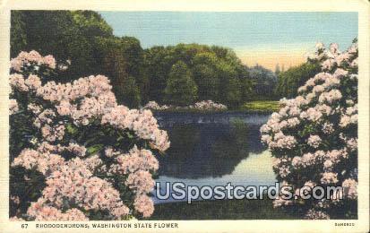 Rhododendrons - State Flower, Washington WA Postcard