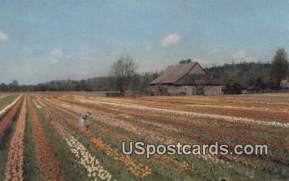 Puyallup Valley, Washington Postcard     ;      Puyallup Valley, WA