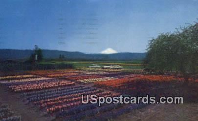 Hatch Bulb Farm - Alderton, Washington WA Postcard