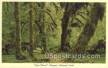 Rain Forest - Olympic National Park, Washington WA Postcard