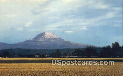Daffodil Fields - Mt Rainier, Washington WA Postcard